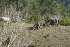 Irunaldea-Entorno-Caballos