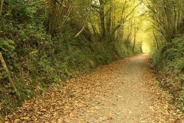 otoño-navarra-turismo